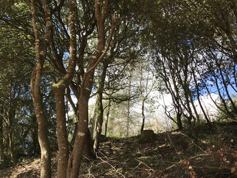 Gites de Sonnay Bois de chênes verts light